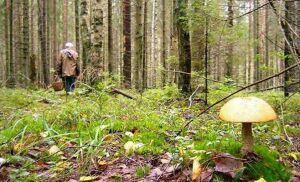 Лесные пожарные Татарстана подвели итоги года
