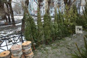 Новогодние елки вКазани будут стоить от300 до1000 рублей