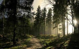 К охране лесов планируют подключить региональные советы безопасности