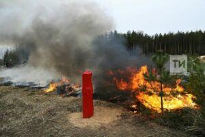 Фото: В Татарстане прошли учения по тушению лесных пожаров