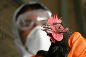 В продукции «Камрегионпродукта» Набережных Челнов обнаружен птичий грипп