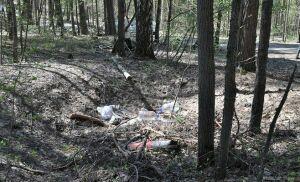 В Чистополе от мусора очистили Пристанской лес