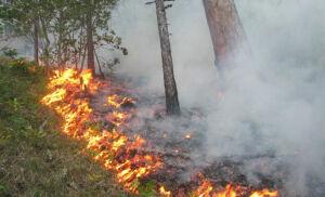 МЧС: В Татарстане высока вероятность возникновения лесных пожаров
