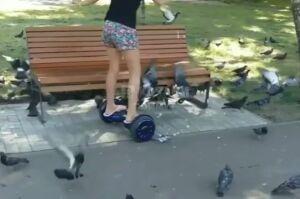 Прокуратура проверяет видео, где девочка в парке Урицкого гироскутером давит голубей