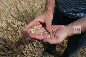 Марат Ахметов назвал лидеров и аутсайдеров среди районов по сбору и урожайности зерна