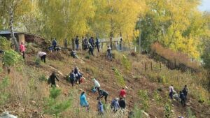 В Мамадыше высадили 1500 новых деревьев