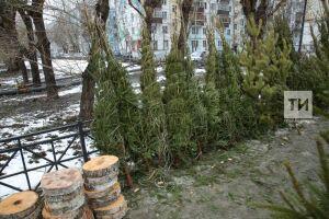Эксперты Роскачества рассказали, как выбрать новогоднюю елку