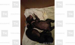 В Новой Москве местный житель нашел в коробке двух медвежат