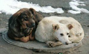 В 2017 году в Татарстане отловлено более 26 тысяч собак и 5 тысяч кошек