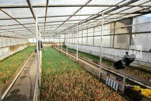 В Татарстане выделят гранты на создание сельскохозяйственных мини-кооперативов