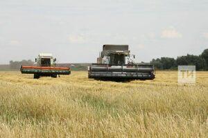 ВТатарстане убрано 75 процентов от общей площади полей