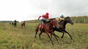 В Арском районе международными конными пробегами отпразднуют День коня