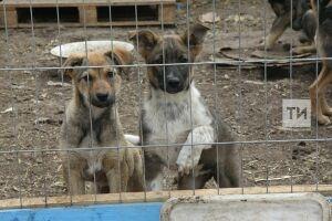 В Татарстане расходы на отлов и содержание безнадзорных животных увеличат вдвое