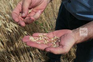 В Татарстане реализуют программу «АгроСемЭксперт» для контроля качества семян