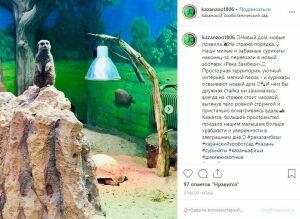 Сурикаты переехали в новую часть Казанского зооботсада