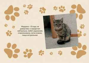 В мэрии Нижнекамска развесили объявления о поиске хозяев для кошек и собак