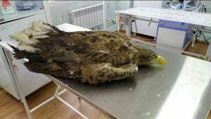 ВИране обнаружили солнечного орла изТатарстана, который прославился в Instagram