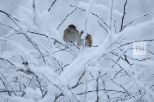 Зима в Татарстан начала приходить на неделю позже