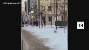 На видео сняли гуляющего по снегу в центре Казани гуся