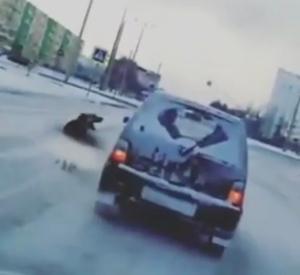 На видео сняли, как водитель в Челнах выгнал собаку на мороз и попытался уехать