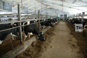 Марат Ахметов: Задача – в ближайшие дни увеличить суточный надой молока на 5%