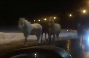 Очевидцы сняли на видео табун лошадей, гуляющий по трассе под Казанью