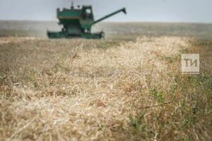 Сельхозпроизводители Татарстана за три месяца получили господдержку на 4,3 млрд рублей