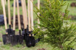 Более двух тысяч гектаров леса восстановили в Татарстане за первую половину 2019 года