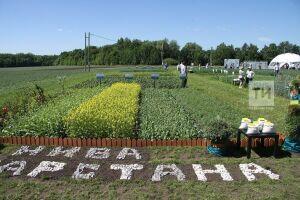 Выставку «День поля в Татарстане» в Лаишевском районе откроет Президент РТ Рустам Минниханов