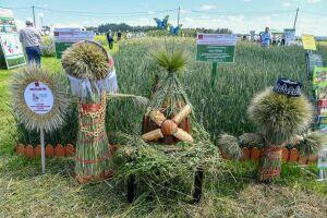 Минсельхозпрод РТ: Прошедшие в Татарстане дожди позволяют надеяться на сбор 5 млн тонн зерна