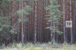 Татарстан станет пилотным регионом программы по озеленению берегов Волги