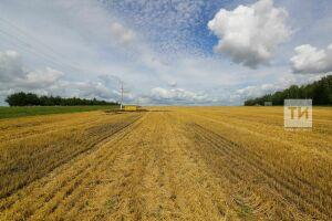 В Татарстане к уборочной кампании подключились аграрии 38 из 43 муниципальных районов