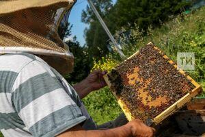 После гибели пчел Минсельхоз РФ предложил создать реестр пчеловодов