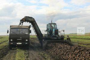 В трех районах Татарстана приступили к уборке сахарной свеклы