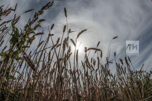 Марат Ахметов призвал оперативно задействовать зерносушилки при уборке урожая в дождливую погоду
