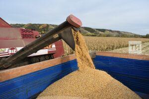 В Татарстане валовой сбор зерна нового урожая превысил 4 млн тонн