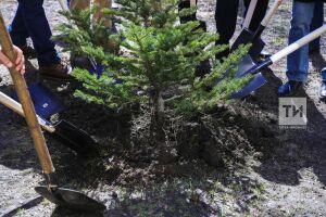 Минлесхоз РТ: К 2024 году воспроизводство лесов будет обеспечено на сто процентов
