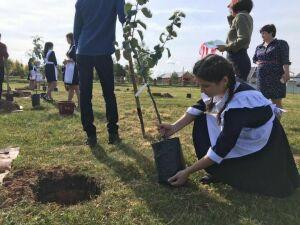Мамадышские школьники высадили сортовые именные яблони на аллее выпускников