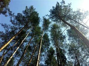 Татарстанцев приглашают принять участие в экологическом квесте «Следы присутствия»