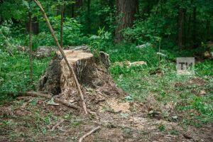 Врезультате «лесной амнистии» площадь лесов РТ сократилась на30тысяч квадратных метров