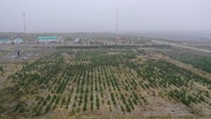 Более 1 млн деревьев в год сажают в Татарстане благодаря отчислениям «Татнефти» от продаж топлива