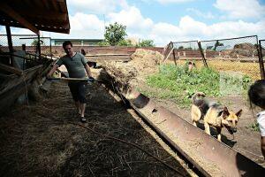 В Татарстане фермеры получат гранты на общую сумму более 300 млн рублей