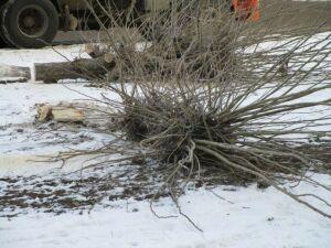 В Елабуге очищают Окружное шоссе от гнилых кустарников