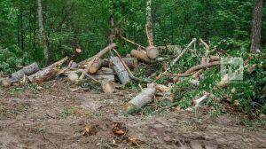 В Татарстане число незаконных рубок леса уменьшилось на 17 процентов
