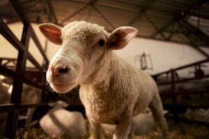 Семейная животноводческая ферма в Елабужском районе выиграла грант на 20 млн рублей