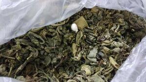 В Казани розыскная собака нашла наркотики, спрятанные в передаче с чаем осужденному