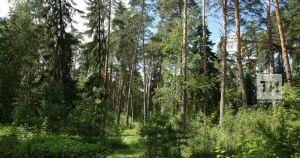 Лесоводы РТ уменьшили площадь погибших насаждений и очагов инфекций на 32 тыс. га