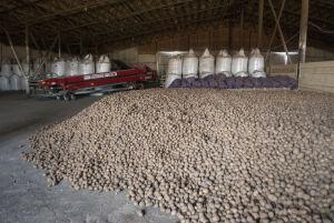 В Татарстане завершили уборку картофеля, собрав более 108,6 тыс. тонн урожая