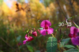 Стало известно, как долго продлится в октябре бабье лето в Казани