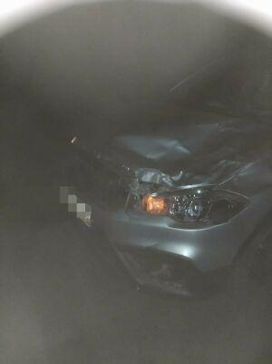 В Татарстане авто сбило лошадь с наездником, мужчина пострадал, лошадь погибла